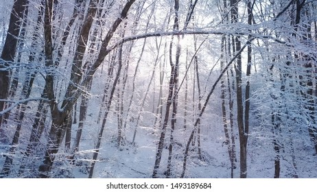 AERIAL CLOSE UP: Sun shining trough misty treetops covered in fresh snow on foggy winter morning. Bright sunrays peaking through fog and bare trees on snowy winter day. Wintry forest landscape