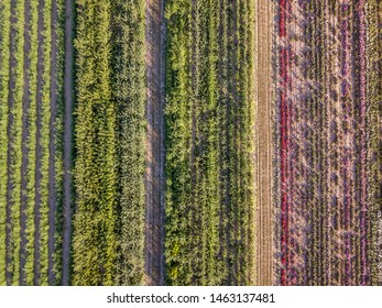 Aerial drone image of fields with diverse crop growth based on principle of polyculture and permaculture - a healthy farming method of ecosystem