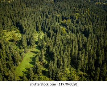 Aerial drone landscape photo of green forest trees growing on high rocky Carpathian mountains.Beautiful view of natural park in Southern Europe.Travel destination for active tourism and hiking