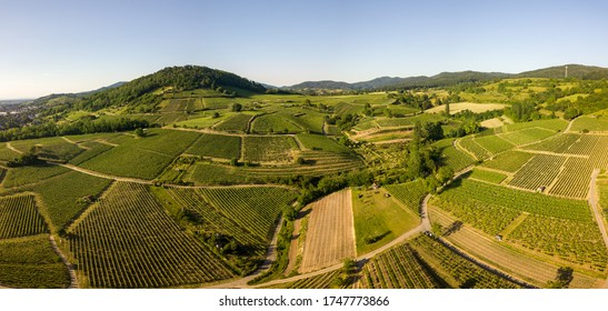 Aerial / Drone Panorama of Vineyard between Heppenheim and Bensheim at the Bergstraße in Hessen in bright sunlight on a cloudless day