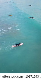 Aerial drone photo of sup surfers in tropical clear water beach
