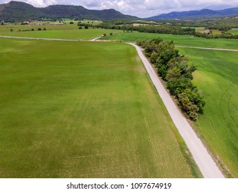 Aerial drone or uav view of wheat and cereal fields afected for pests. Precision agriculture for agronomists. Green background.
