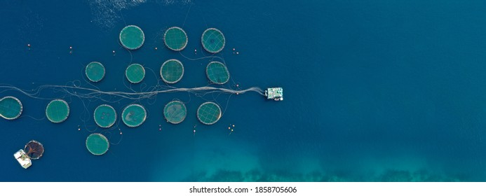 Aerial drone ultra wide panoramic photo of large fish farming unit of sea bass and sea bream in growing cages in calm deep waters of Galaxidi area, Greece
