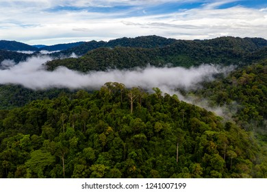 Aerial drone view of clouds and mist forming over a tropical rainforest after a recent rain storm