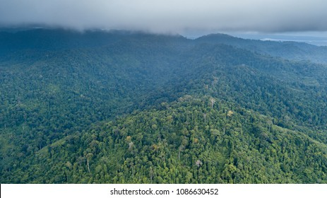 Aerial drone view of a cloudy tropical rain forest