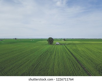 Aerial drone view of green country house field with row lines, top view