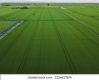 Aerial drone view of green rice field with landscape green pattern nature background
