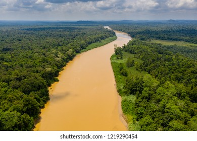 Aerial drone view of a long, brown winding river through tropical rainforest (Kinabatangan River, Borneo)
