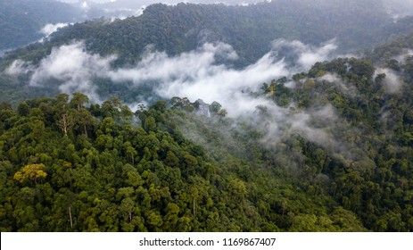 Aerial drone view of mist and low cloud over a dense tropical rain forest