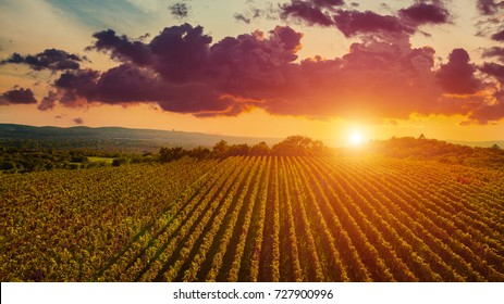 Aerial drone view of wineyards fields from the top at the sunset. Drone Aerial View Concept.