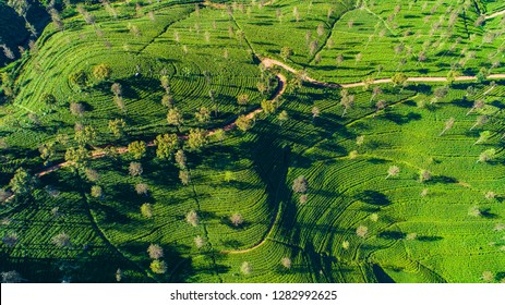 Aerial. Famous green tea plantation landscape view from Lipton's Seat, Haputale, Sri Lanka.