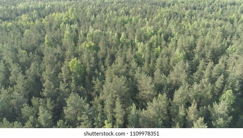 Aerial flight over mixed forest on a sunny summer day