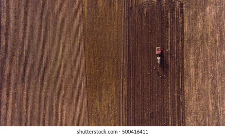 Aerial flight of potato field. Farmers with tractor are harvesting.