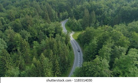 AERIAL: Flying behind a single black car driving down the scenic country road running through the beautiful forest in Slovenia. Cinematic shot of tourists on road trip in the picturesque countryside.
