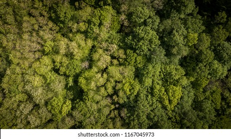 Aerial of flying over a beautiful green forest in a rural landscape, Gironde, France