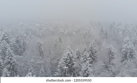AERIAL: Flying over an empty coniferous forest during an intense snowstorm. Cinematic shot of an intense blizzard covering the remote woods. Cold winter weather in the mountains. Low visibility.
