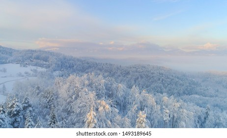AERIAL: Flying over frozen snowy treetops towards countryside town on misty morning. Golden sun rising behind icy mixed forest covered in morning fog and snow in cold winter. Stunning winter landscape