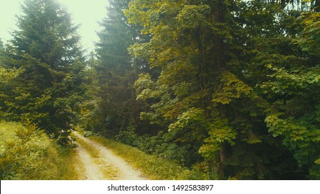 aerial forest after rain with athmosferic fog clouds and curvy country road