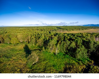 Aerial forest panoramic view at golden hour