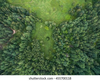 Aerial forest view at summer time with good weather