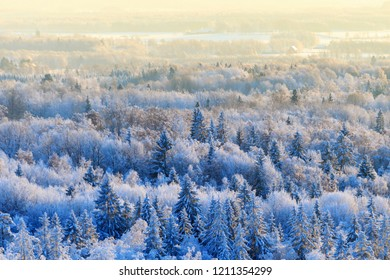 Aerial forest view at winter