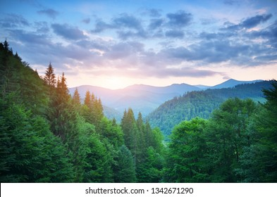 Aerial green mountains hills at sunset . Fir and spruce forest. Composition of nature.