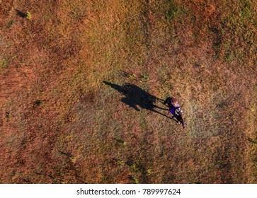 Aerial Of Horse and Rider