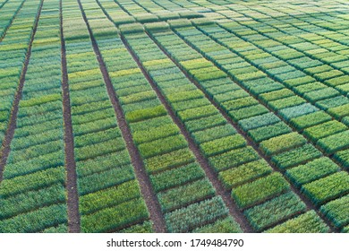 Aerial image of agricultural test plots with different sorts of cereal crops, hybrids, shoot from drone - Shutterstock ID 1749484790