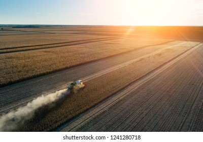 Aerial image of combine harvester working in soybean field at sunset shoot from drone