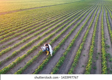 Aerial image of handsome young agronomist in white coat holding laptop and checking soybean quality in rows in summer