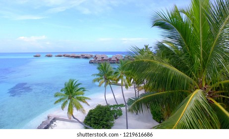 AERIAL: Large palm tree canopy obstructs the view of luxury overwater villas built above the turquoise colored ocean water. Spectacular tourist oceanfront huts near the picturesque tropical island.