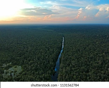 Aerial morning view of the river and jungle with palms, forest and trees in East Kalimantan (Borneo) - Kumai, Tanjung Puting national park and Camp Leakey