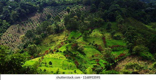 Aerial mountain landscape in Buenavista, Quindio, Colombia, South America