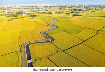Aerial panorama of beautiful farmlands bathed in warm sunlight & a country road by an irrigation canal winding thru rice paddies on a sunny day in the season of golden harvest in Yilan (Ilan), Taiwan