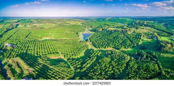 Aerial panorama of Macadamia Farm in New South Wales, Australia