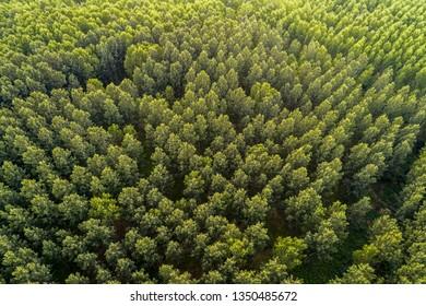 Aerial panorama over a mountain. Bulgaria