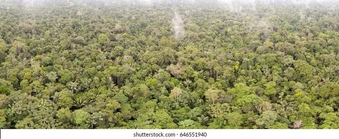 Aerial panorama of pristine tropical rainforest near Rio Shiripuno in the Ecuadorian Amazon..