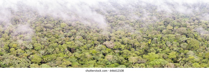 Aerial panorama of pristine tropical rainforest near Rio Shiripuno in the Ecuadorian Amazon on a cloudy day.
