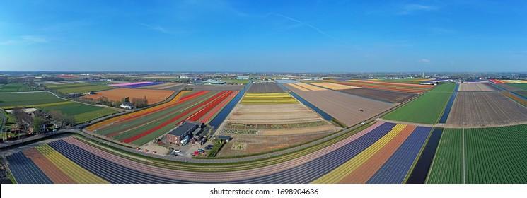 Luftpanorama von Tulpenfeldern im Frühjahr in den Niederlanden