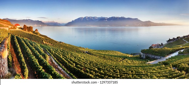 Aerial panoramic view of the city of Vevey at Lake Geneva with vineyards of famous Lavaux wine region on a beautiful sunny day with blue sky in summer, Canton of Vaud, Switzerland