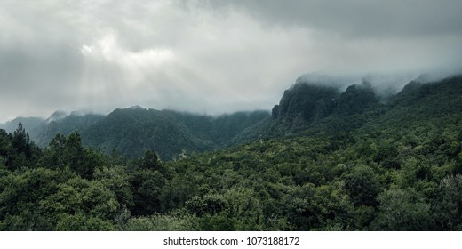 Aerial, panoramic view of a forest in the mountains on a foggy day with copy space