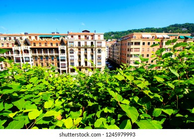 Aerial part of the residential part of San Sebastian, Basque country, Spain. View at buildings with the luxuriant vegetation on the foreground.