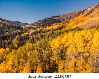 Aerial photo of beautiful yellow Autumn Aspen tree leaves. Taken Aspen, Colorado Rocky Mountains. USA