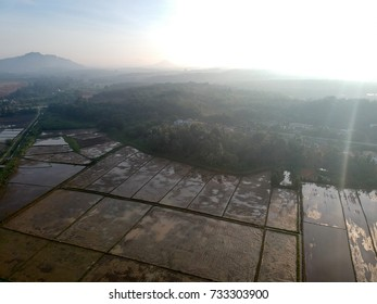 Aerial Photo - Bird's eye view of the paddy field after harvest at morning.