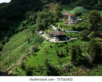 Aerial Photo - Bird's eye view of the tea farm after harvest at morning.