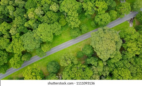 Aerial photo country road between avenue of trees green forest rural countryside