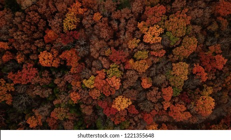 Aerial photo of fall leaves changing in Missouri.   High up photos of trees during season change.  orange, green, red, yellow tones in the trees.  birds eye view.  background photo.