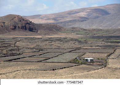 Aerial photo of fields in Lanzarote, Canary Islands