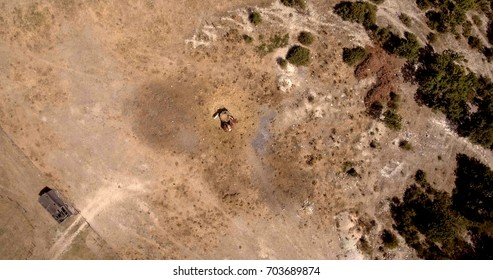 aerial photo of horses eating on sunny summer day in a dry field, vertical view