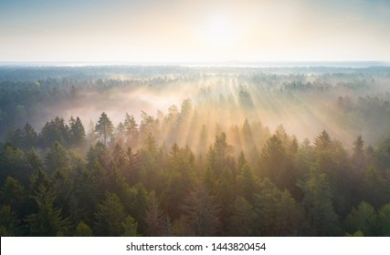 Aerial photo of Hrodna forest (Augustow forest)